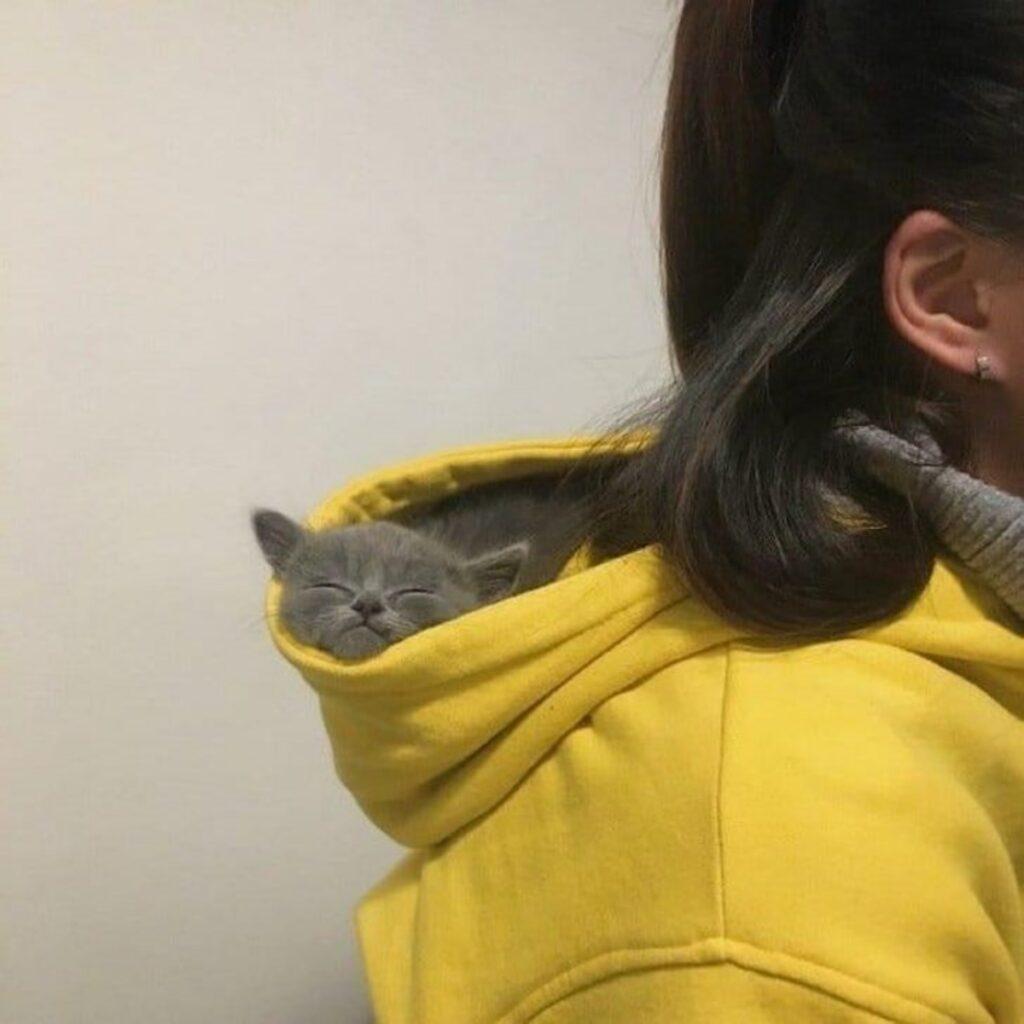 gattino dorme felpa