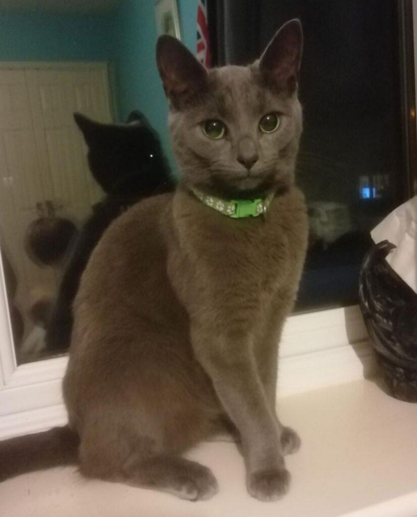 gatto grigio scultura