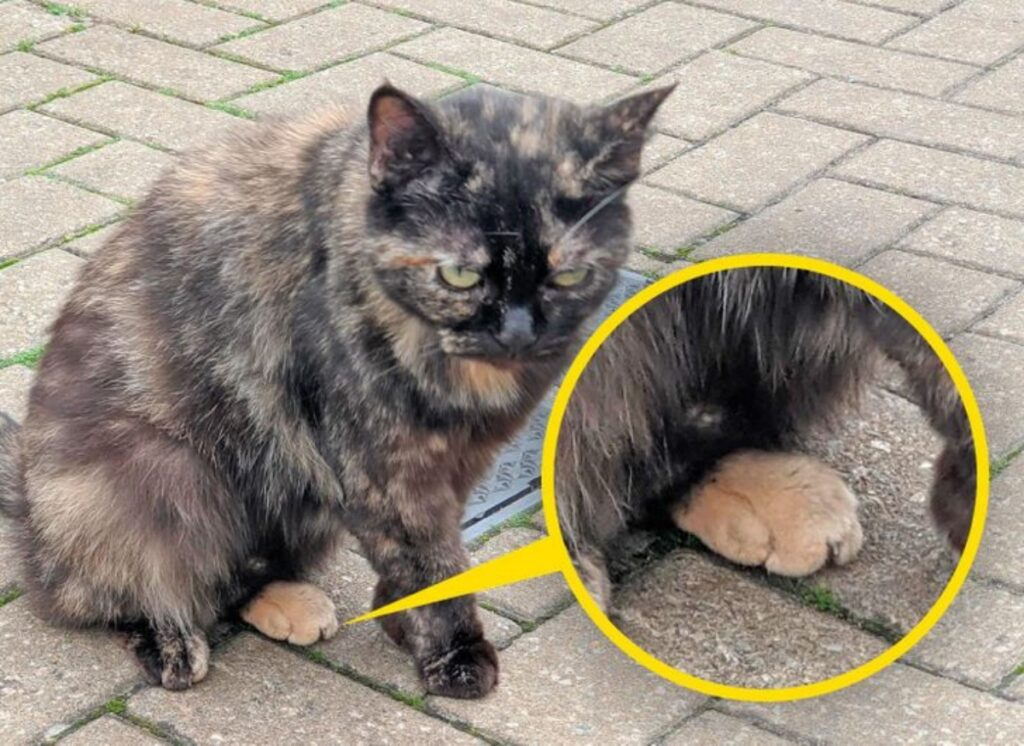 gatto zampa arancione