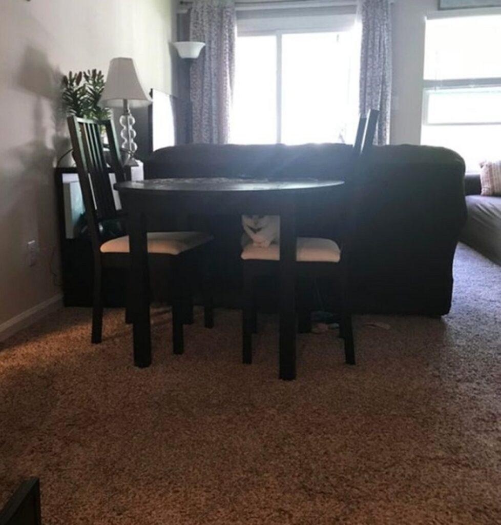 gatto tavola sedia