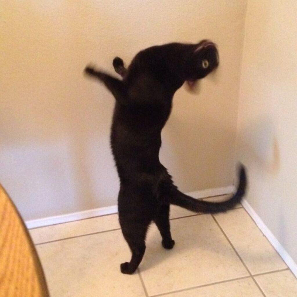 gatto nero in piedi