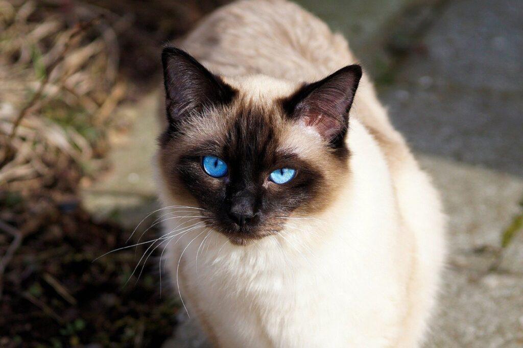 gatto dolce muso