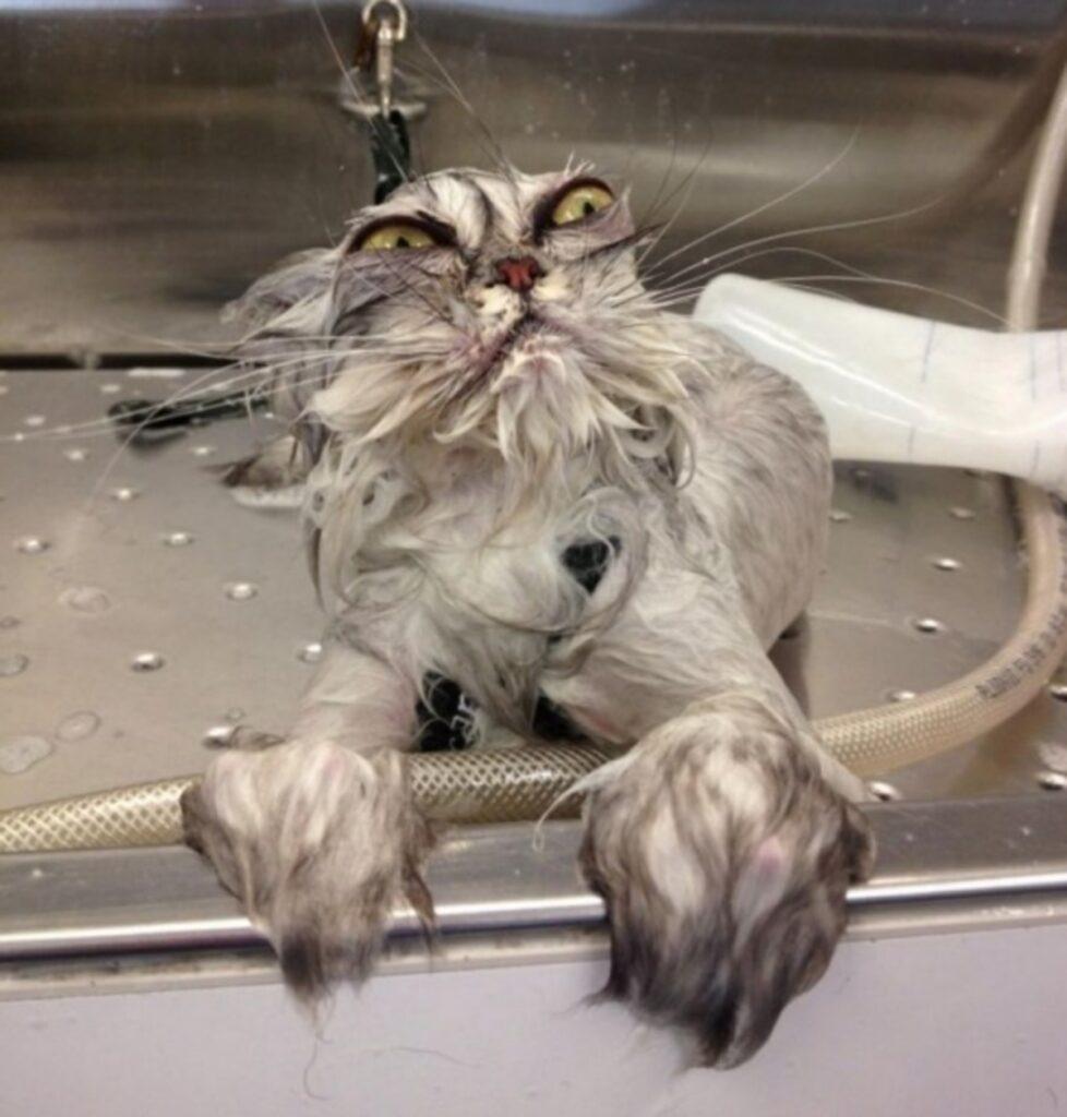 gatto vasca simpatico