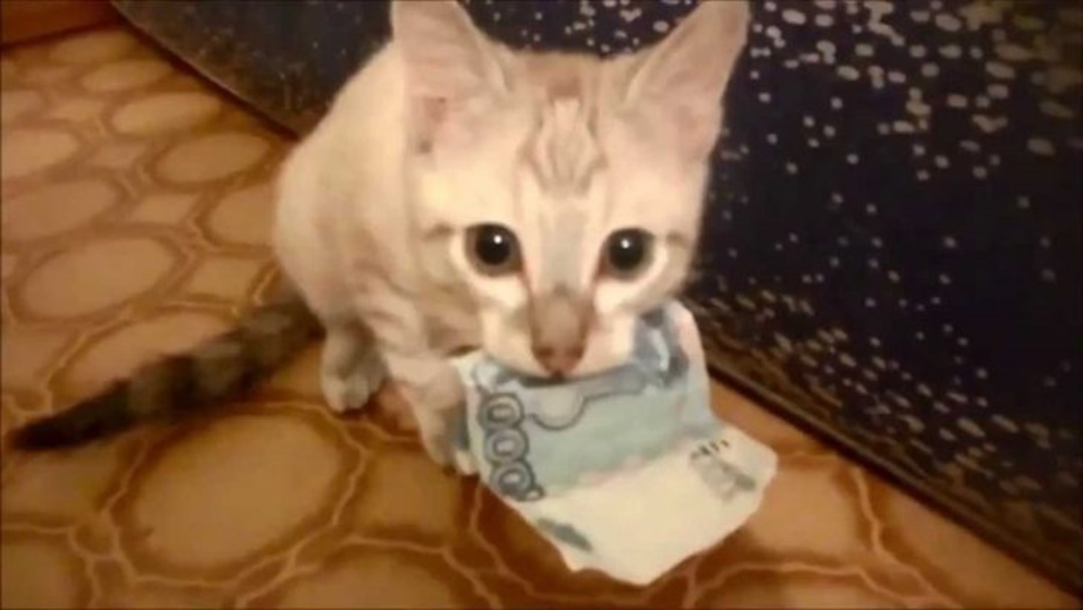 gatto soldi