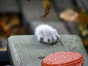 gatto zampa