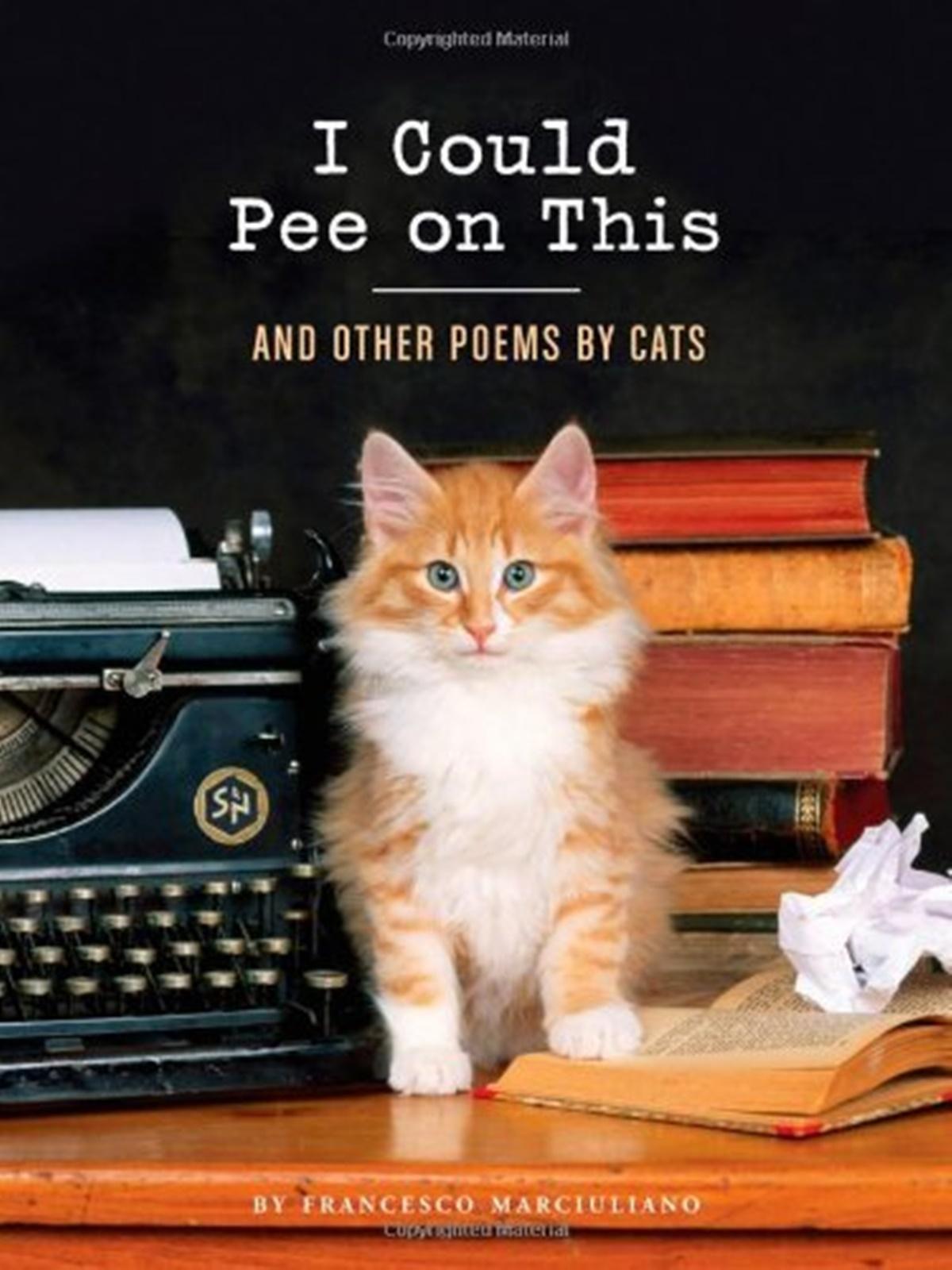 gatto scrive