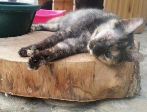 gatto che si riposa