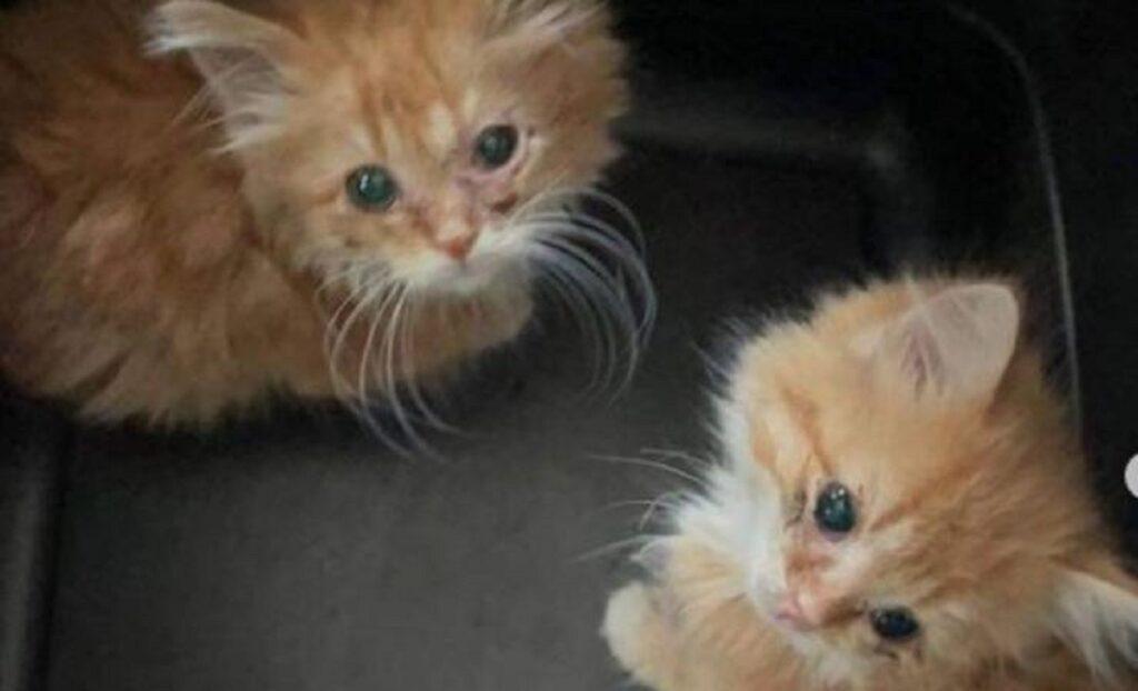 gattini salvati dalla strada