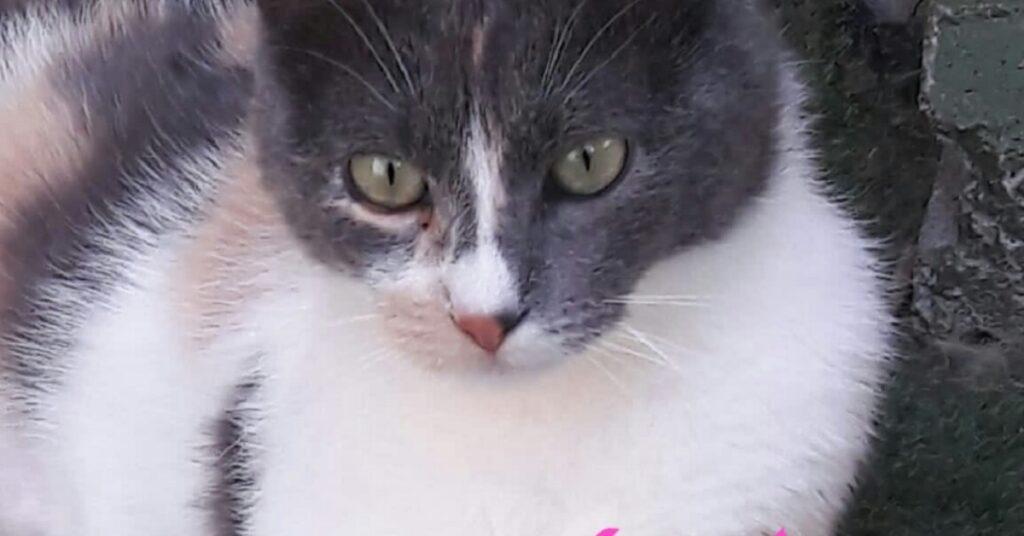 micio in gattile cerca casa