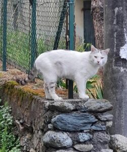 gatto killer di catione andevenno