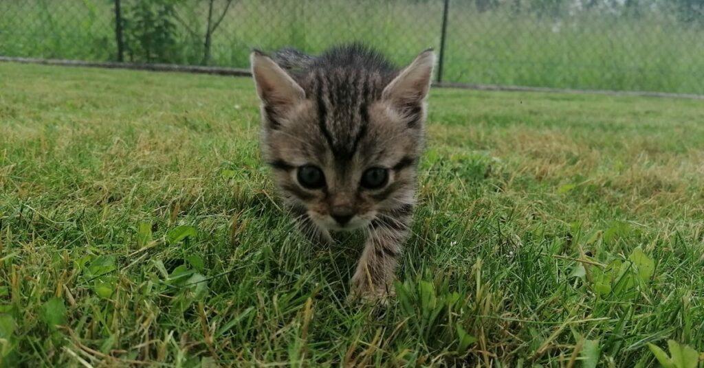 piccolo gatto cerca adozione