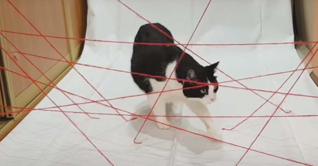 Sfida impossibile per un gatto