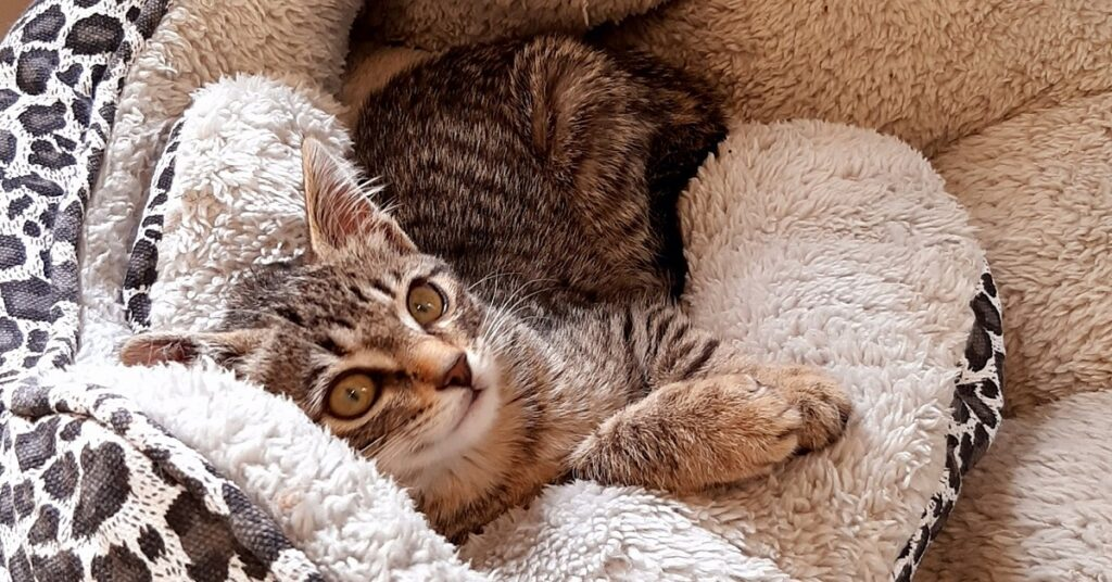 gattina nel gattile