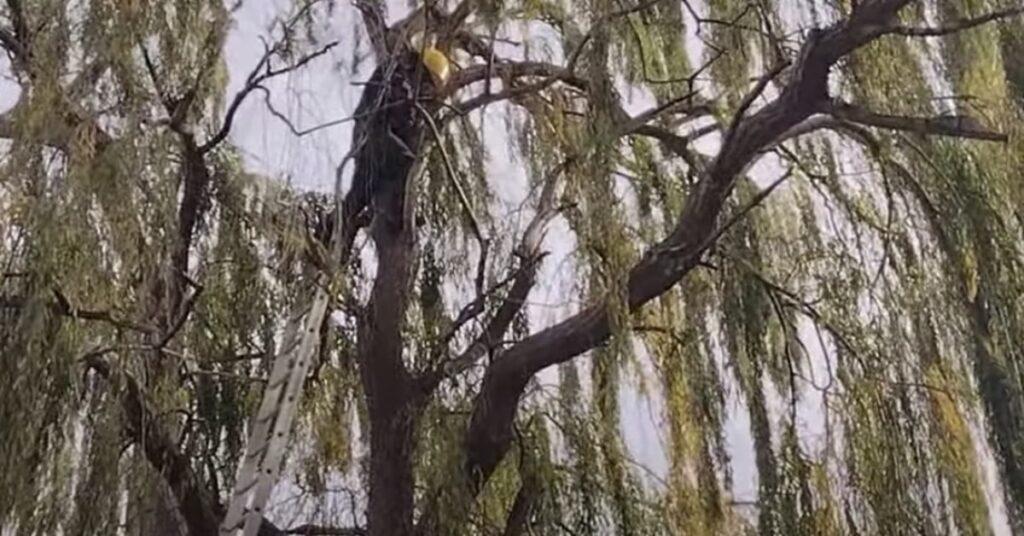 pompiere salva gatto su albero