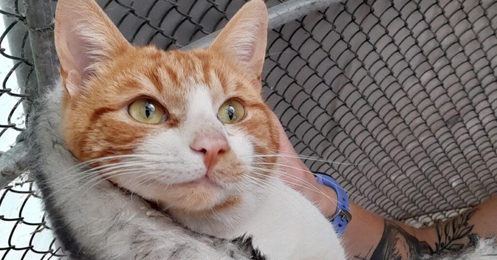 gatto cerca adozione