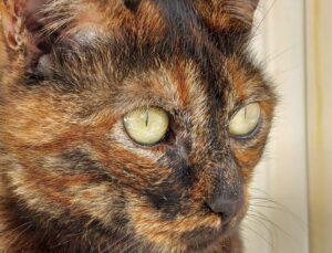 gattina che osserva