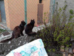 gatti su un muretto