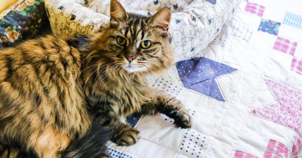 gatto dolce in gattile