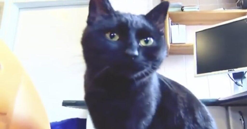 gatto nero in una clinica veterinaria