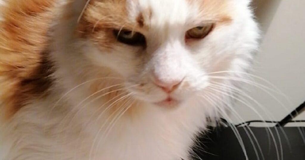 gattino con gli occhi tristi