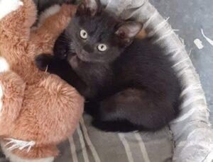 gattina accoccolata
