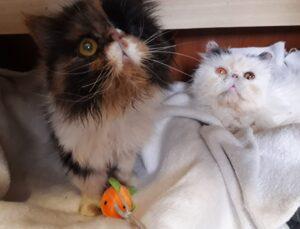gatti che osservano