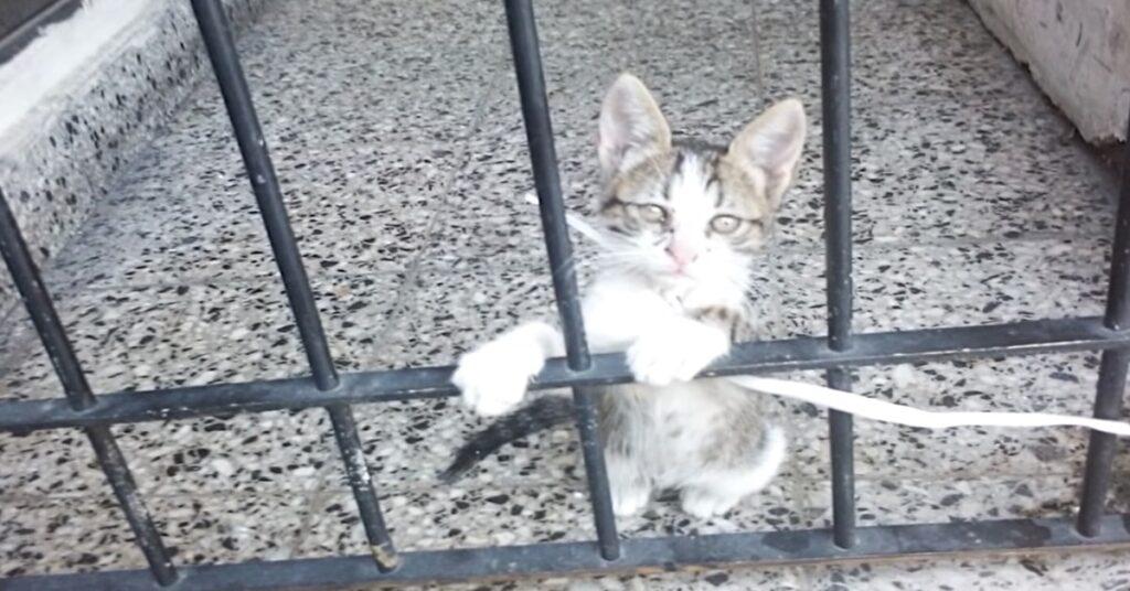 gatto abbandonato e legato