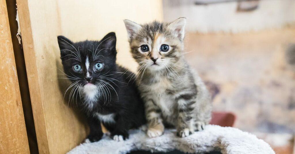 gattini fratelli