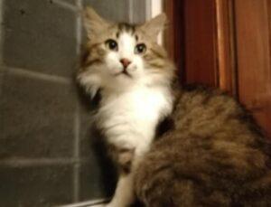 gatto sul davanzale di una finestra