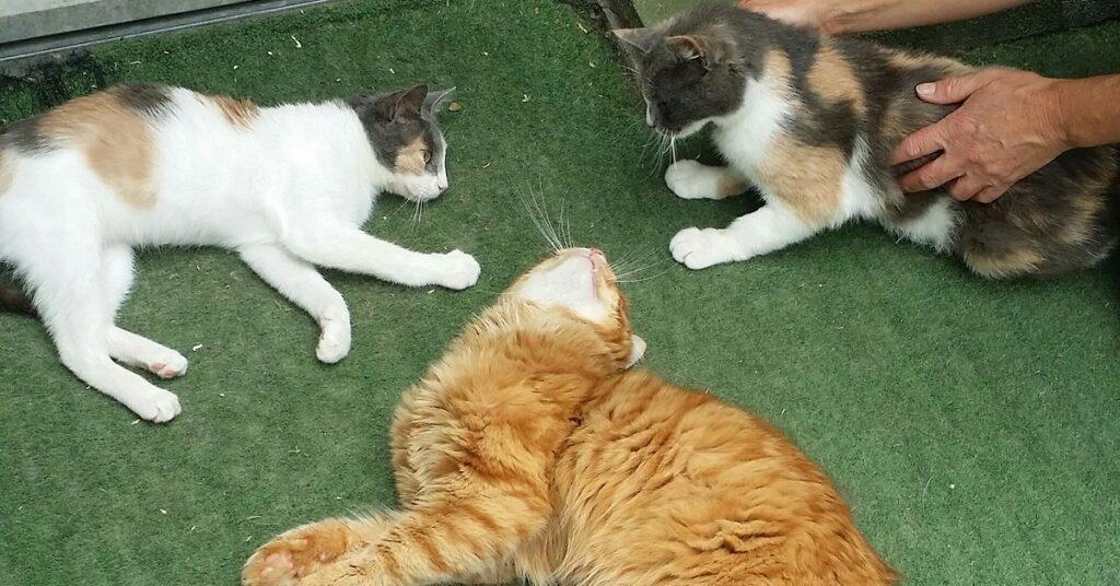 trio di gatti