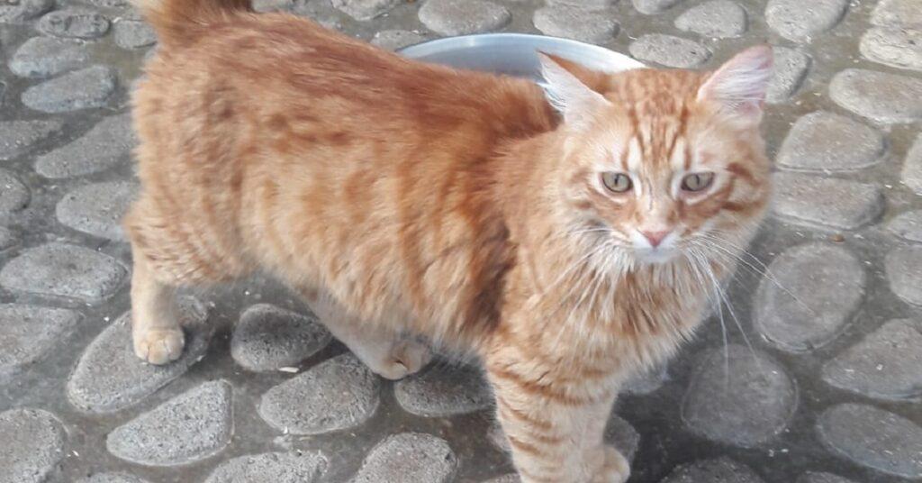 gatti rosso