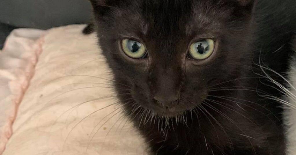 gatto dagli occhi verdi