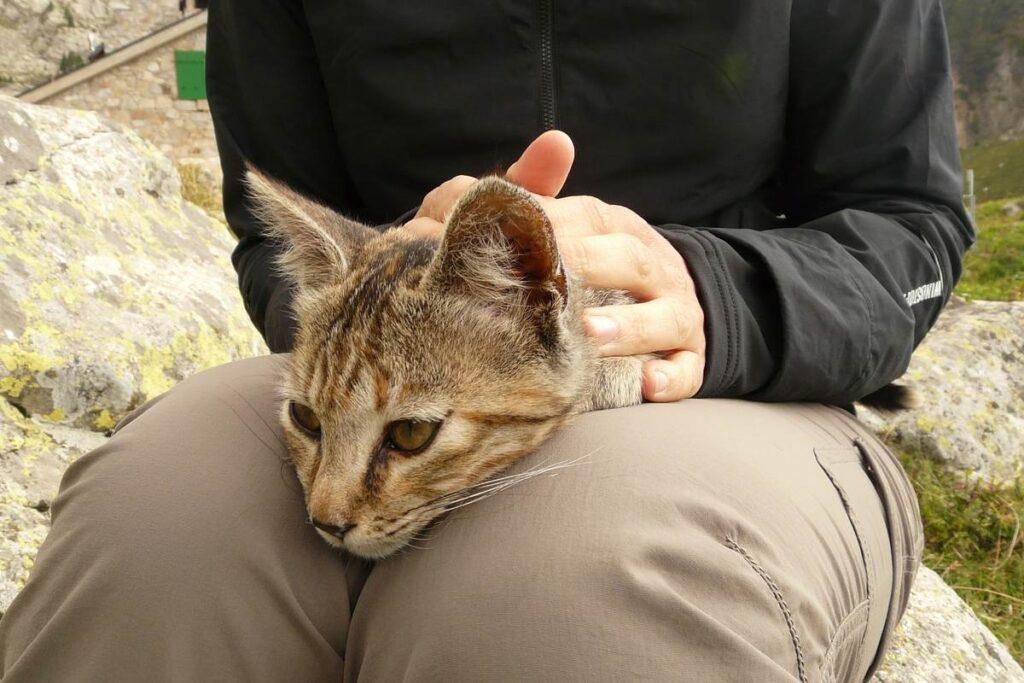 tenere il gatto in braccio