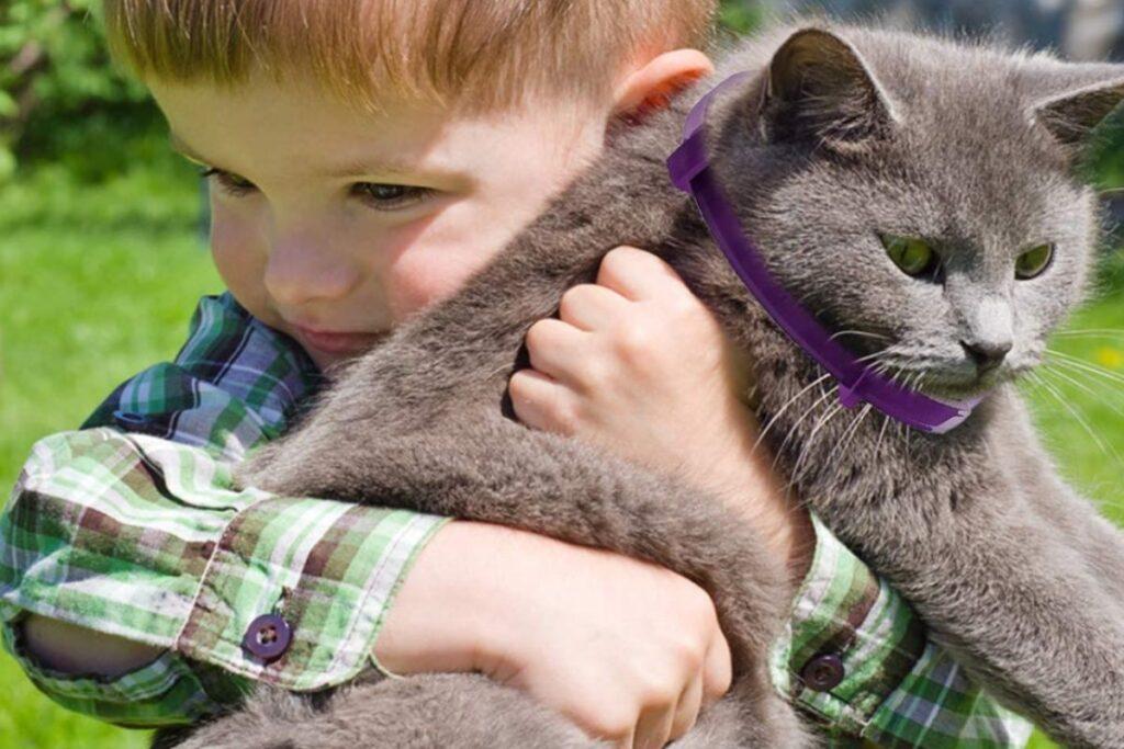 collare calmante per gatto