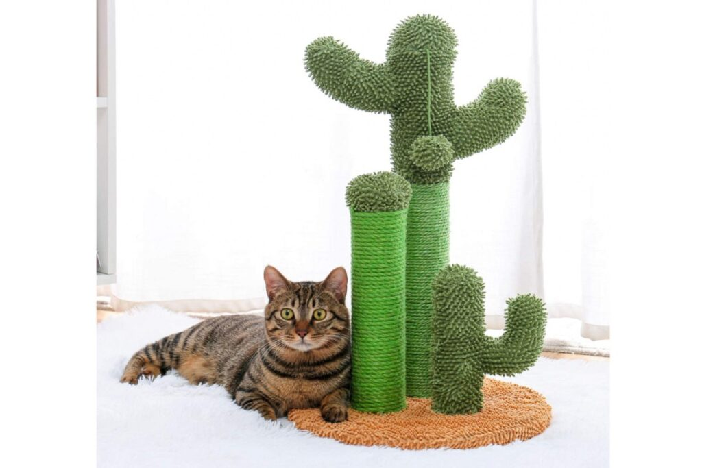 tiragraffi a forma di cactus