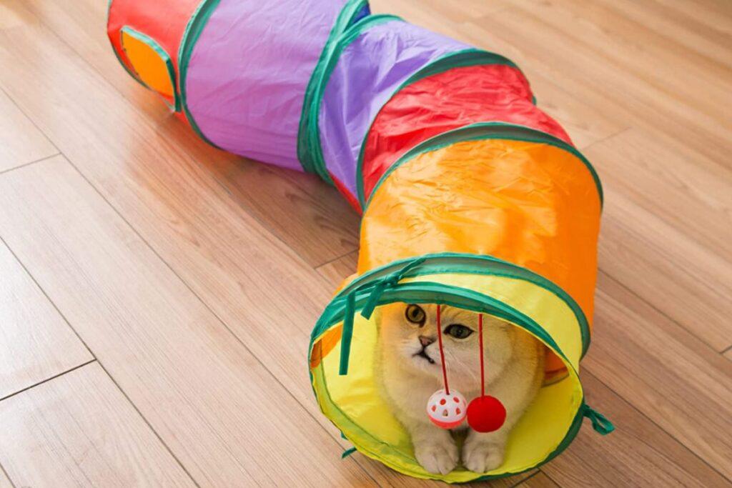 tunnel colorato per gatti