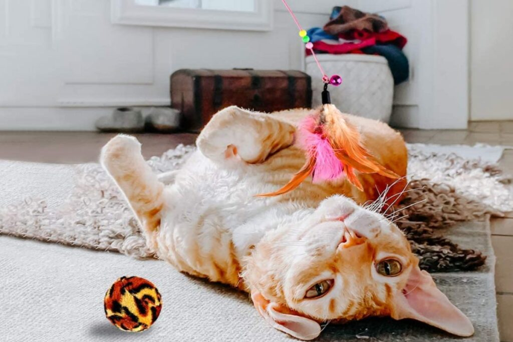 gatto che gioca con i suoi giocattoli