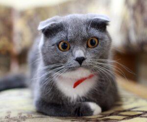 gatto con l'espressione sorpresa