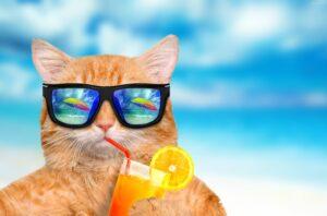 gatto con gli occhiali da sole