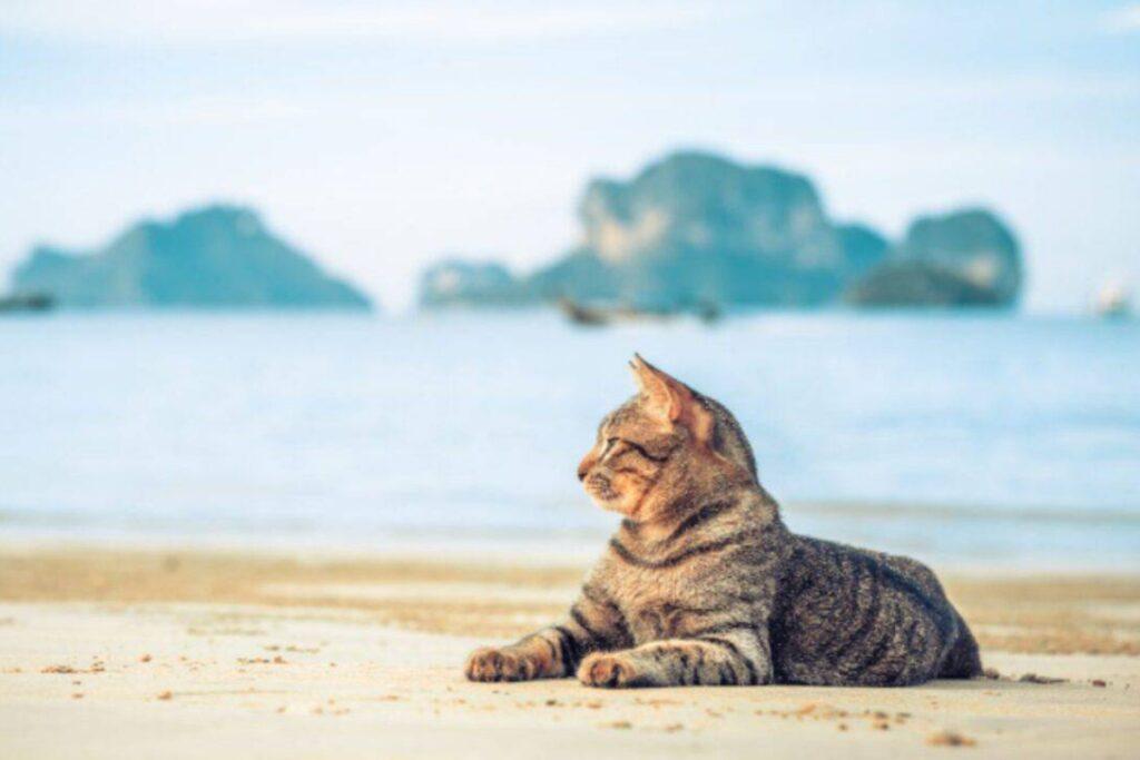 gatto si riposa al mare