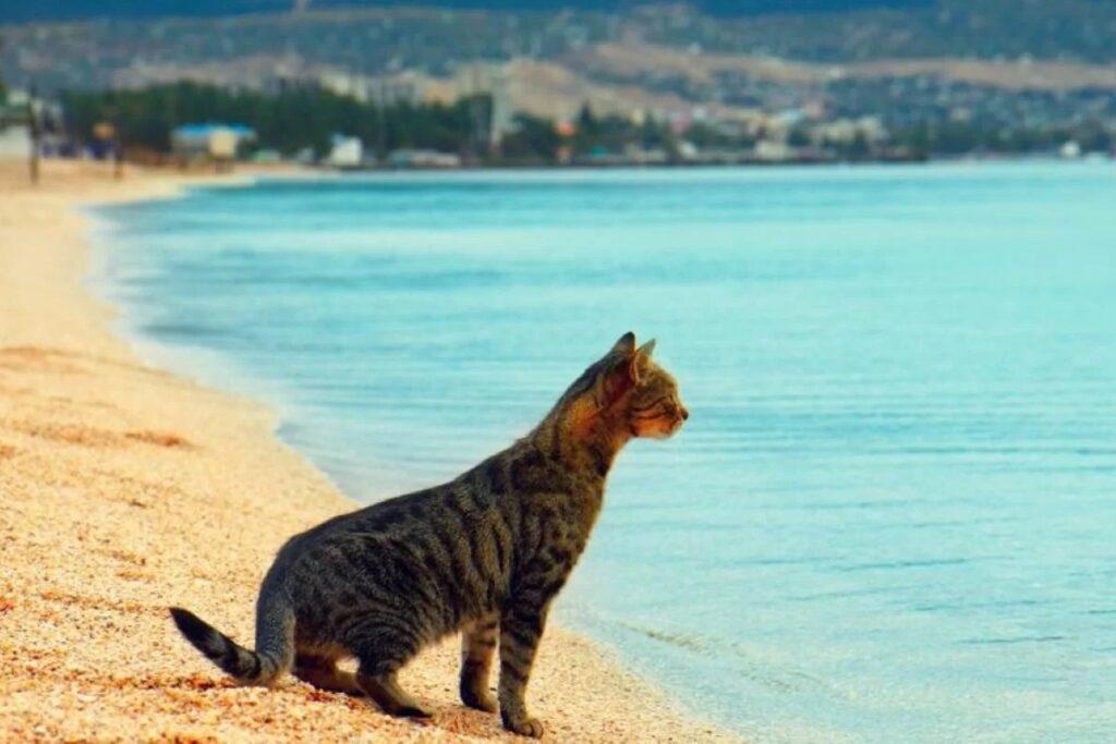 cane sulla riva del mare