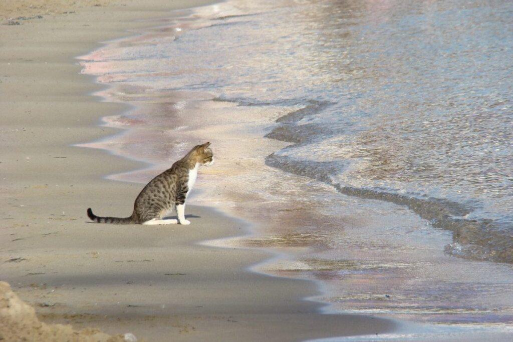 gatto che ama il mare