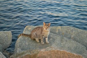 gatto sugli scogli