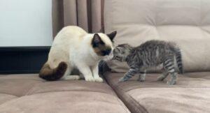 primo incontro tra gatti