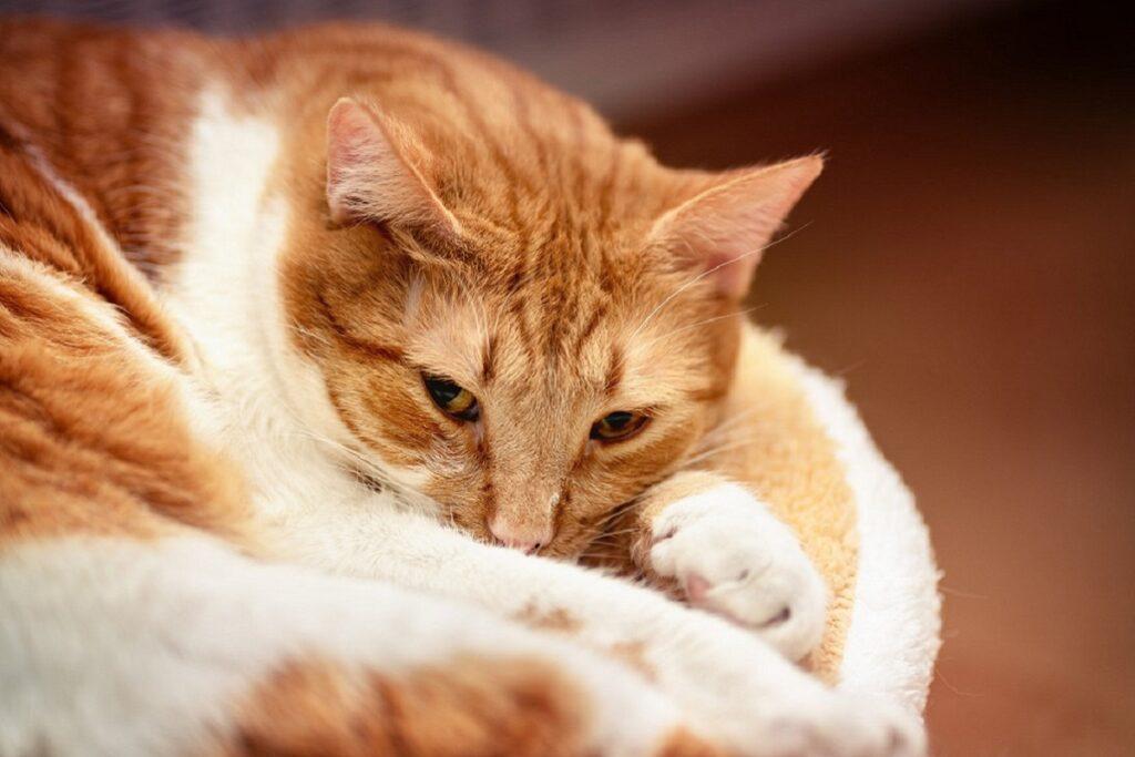 gatto giù di corda