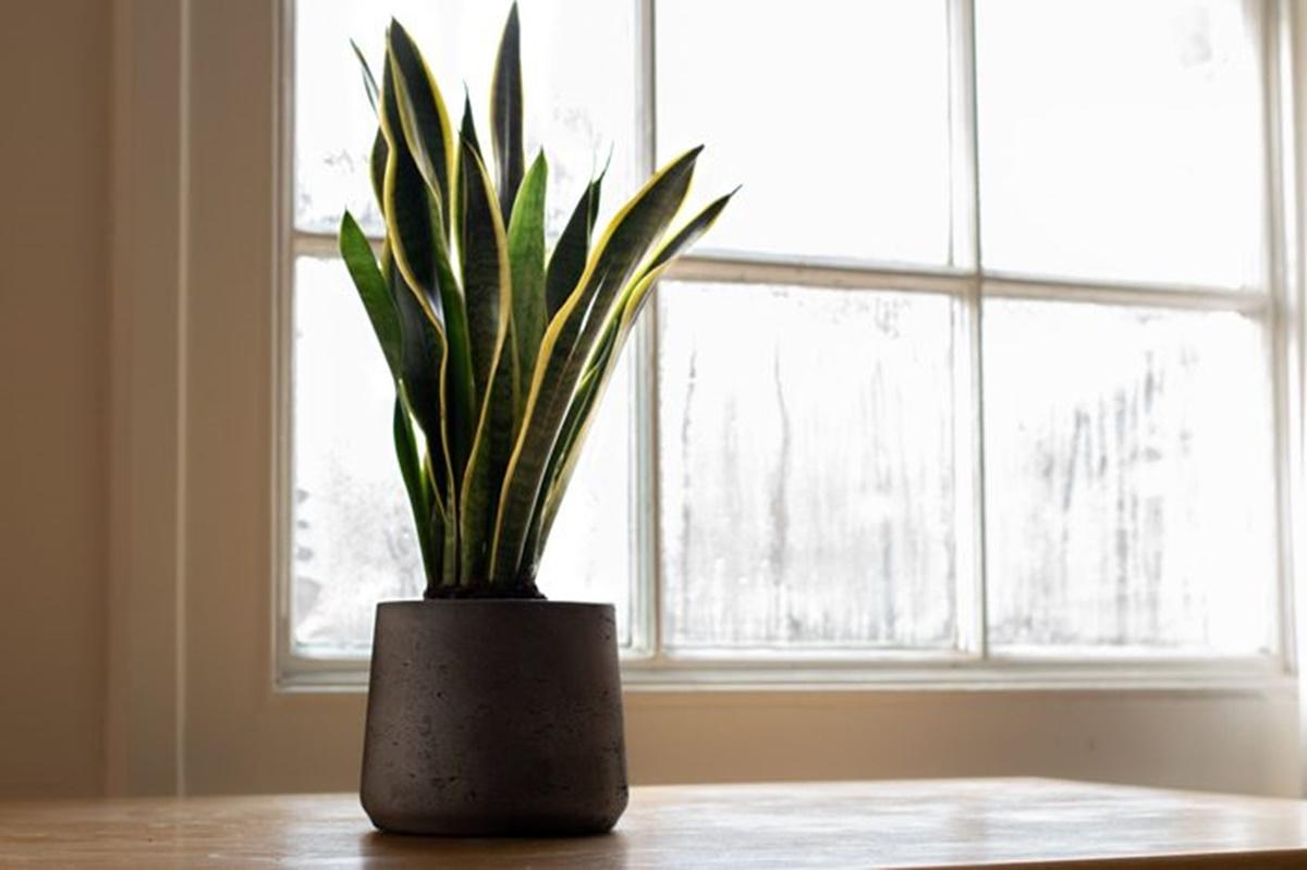 pianta in vaso grigio