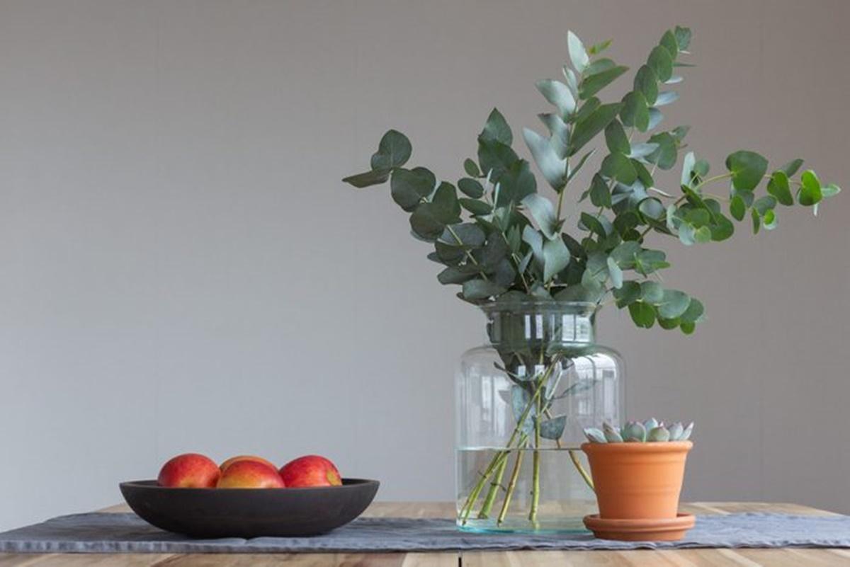 pianta con frutta