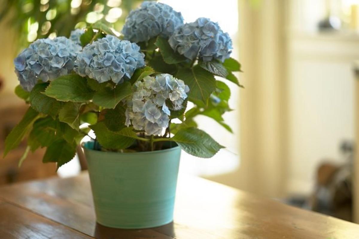 pianta fiori blu