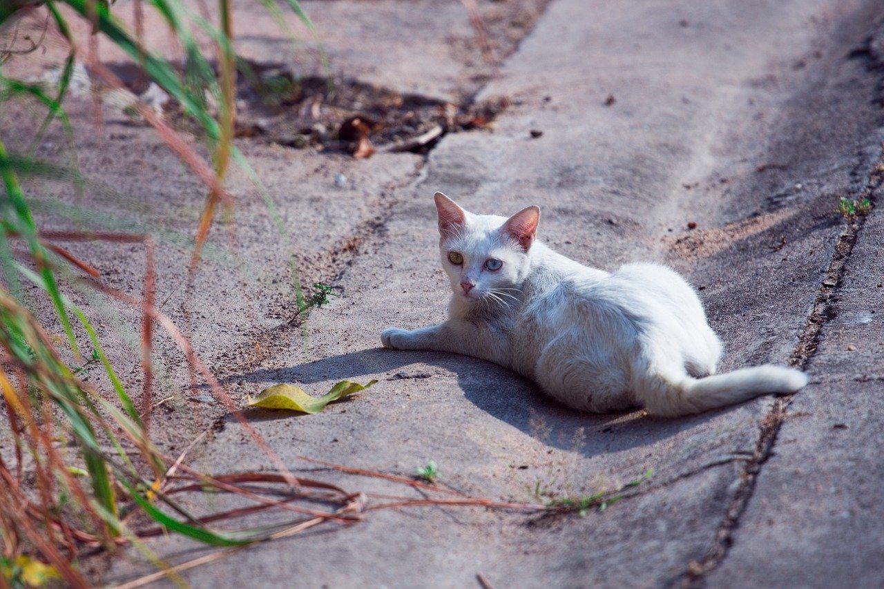 gattino sdraiato al sole
