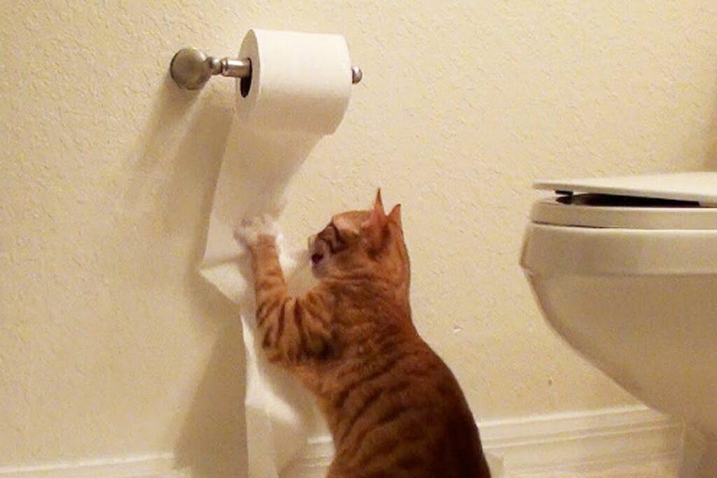 gatto che graffia il rotolo di carta igienica